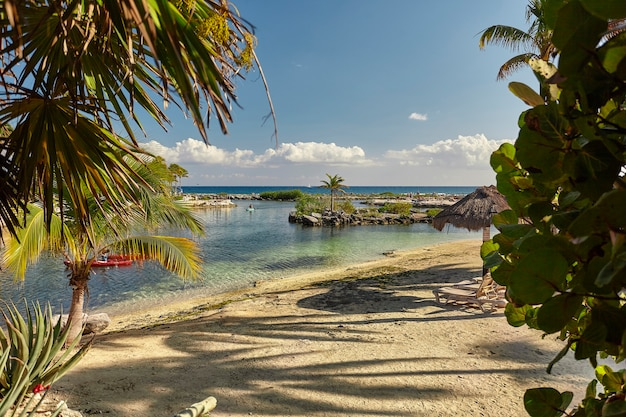 Widok na plażę puerto aventuras w meksyku filtrowane przez naturalną roślinność.