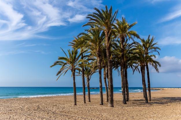 Widok na plażę villajoyosa z palmami na pierwszym planie, alicante, hiszpania.