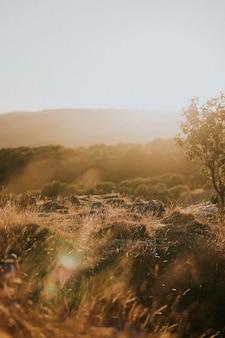 Widok na pole z brązową trawą