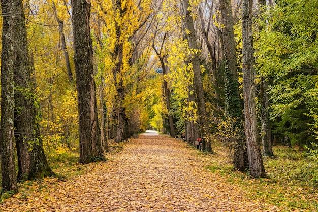 Widok na ścieżkę wśród drzew w bardzo kolorowym lesie jesienią
