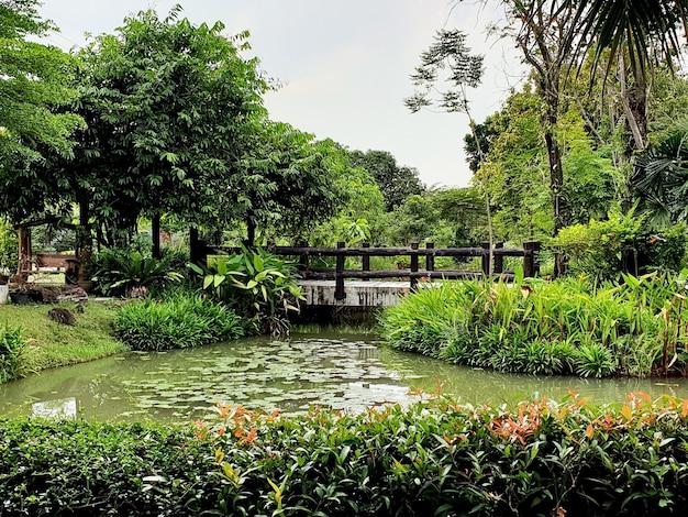 Widok na staw lotosowy i most w ogrodzie