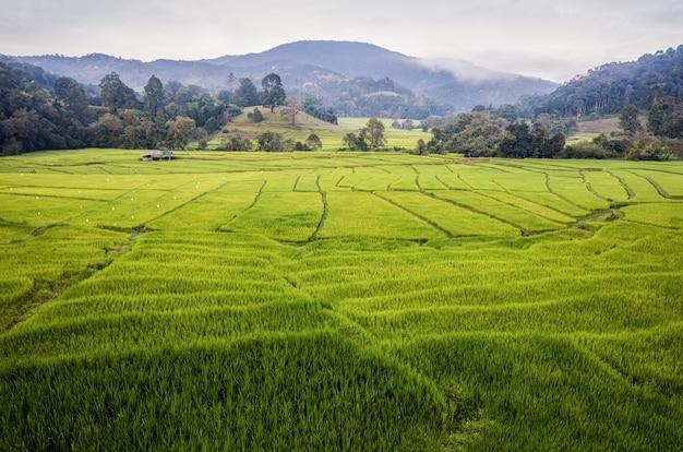 Widok na tarasy ryżowe po drodze w północnej tajlandii.