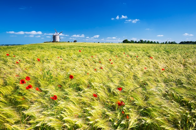 Widok na wiatrak i pole pszenicy, francja, europa.