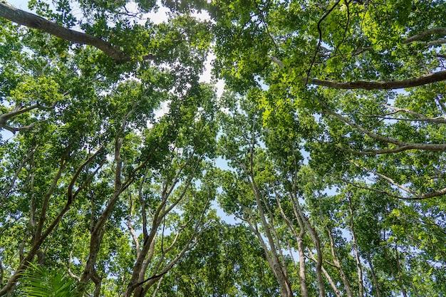 Widok na wierzchołki drzew w dżungli w słoneczny dzień, wyspa zanzibar, tanzania, afryka wschodnia
