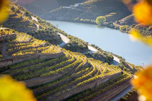 Widok na winnice doliny douro z jesiennymi rdzeniami - portugalia.
