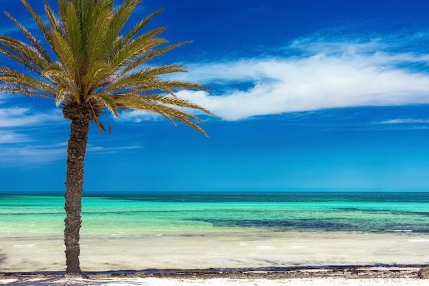 Widok na wybrzeże śródziemnomorskie z turkusowym morzem, białym piaskiem i palmą