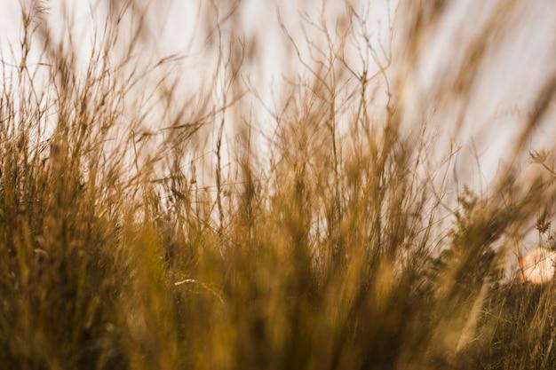 Widok na wysokie łąki