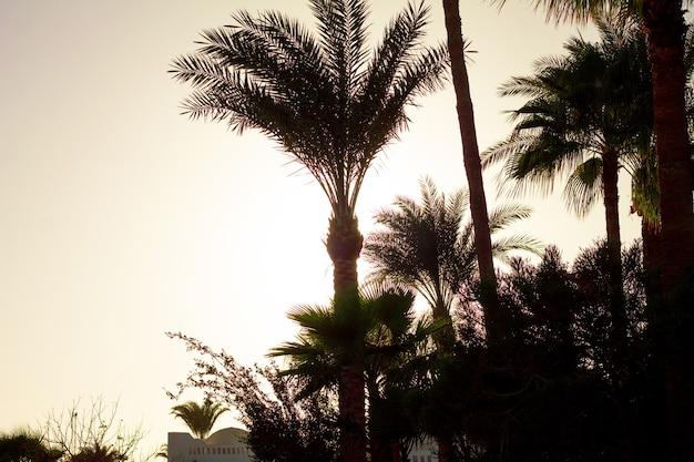 Widok na zachód słońca, panorama krajobrazu przyrody. morze czerwone w dahab egipt półwysep synaj.