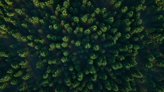 Widok na zielone lasy
