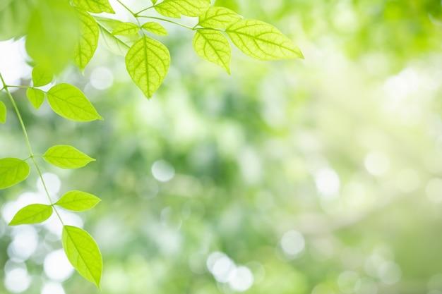 Widok na zielony liść na niewyraźne tło zieleni
