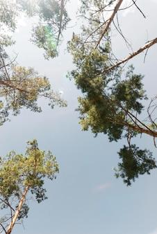 Widok na ziemię drzew w świetle dziennym