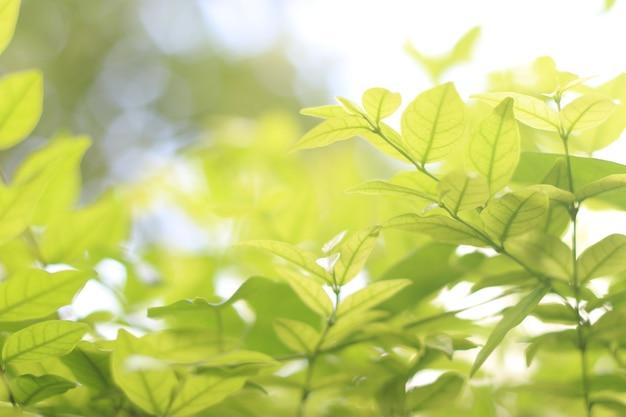 Widok natury zielonego liścia na rozmytym tle zieleni w parku z miejscem na kopię tekstu używającego jako tła naturalnej zieleni