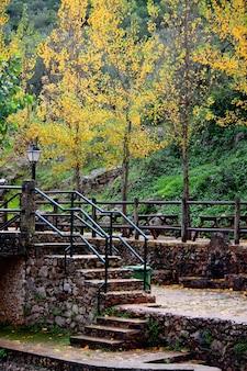 Widok niektóre schodki na parku z jesień liśćmi i drzewami.