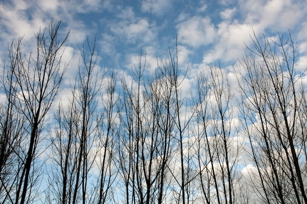 Widok niektórych gałęzi drzew bez liści jesienią.