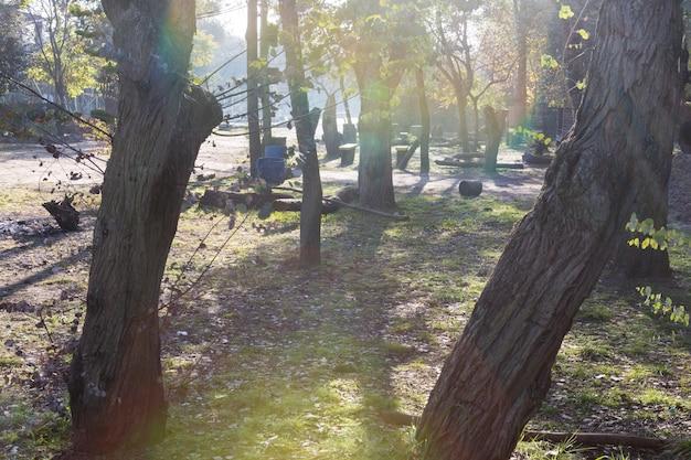 Widok parkowych drzew o zachodzie słońca