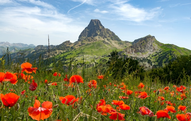 Widok pic du midi d'ossau we francuskich pirenejach, z polem maku