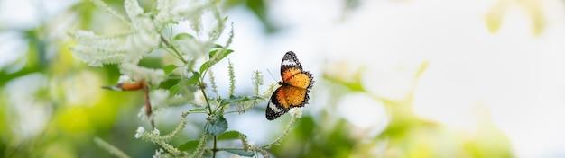 Widok pomarańczowego motyla na biały kwiat z zieloną naturą rozmazaną powierzchnię z miejsca na kopię