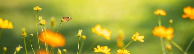 Widok pomarańczowego motyla na młody żółty kwiat z zieloną naturą rozmazaną powierzchnię z miejsca na kopię