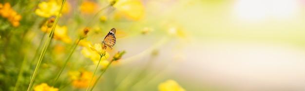 Widok pomarańczowego motyla na żółtym kwiatku z zieloną naturą rozmazaną powierzchnią z miejsca na kopię