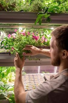 Widok przez ramię brodatego mężczyzny stojącego na półce z uprawnymi roślinami i monitorującego stan zdrowia i choroby