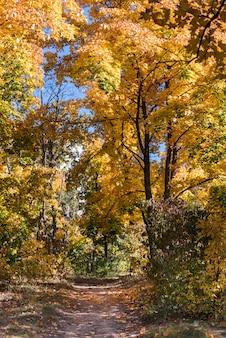 Widok pusty chodzący ślad w jesień lesie