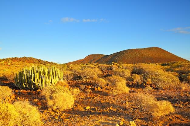 Widok pustyni z kaktusami o zachodzie słońca na teneryfie, wyspy kanaryjskie.