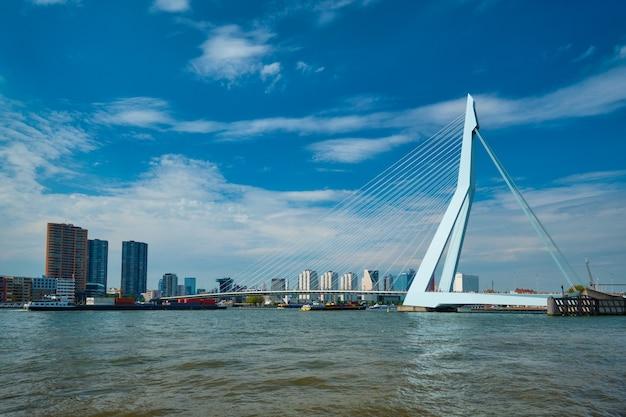 Widok rotterdamu nad nieuwe maas z mostem erasmusbrug rotterdam holandia