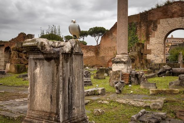 Widok rzymskiego forum rzym jesienią