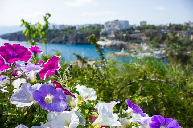 Widok śródziemnomorski port w antalya przez jaskrawych kwiatów na przedpolu