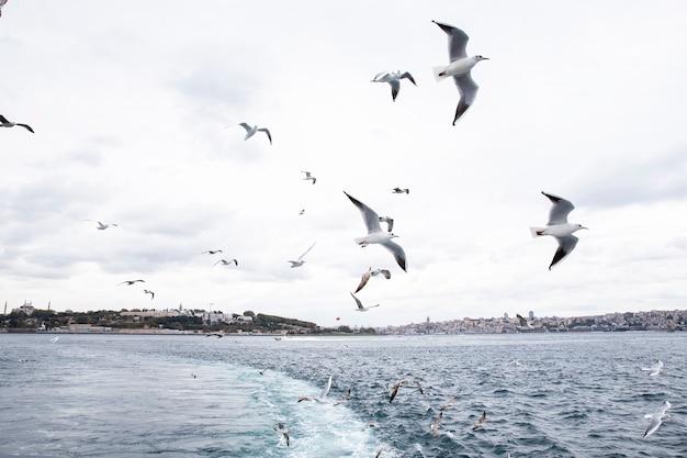 Widok stambułu ze statku przy pochmurnej pogodzie, latające mewy, fale i piana jako ślad z łodzi, turcja