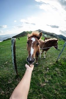 Widok subiektywny, ręka karmiąca konia