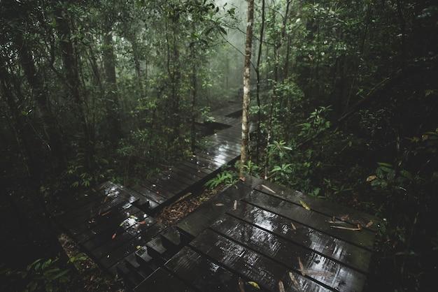 Widok tropikalny las, khao yai park narodowy, tajlandia