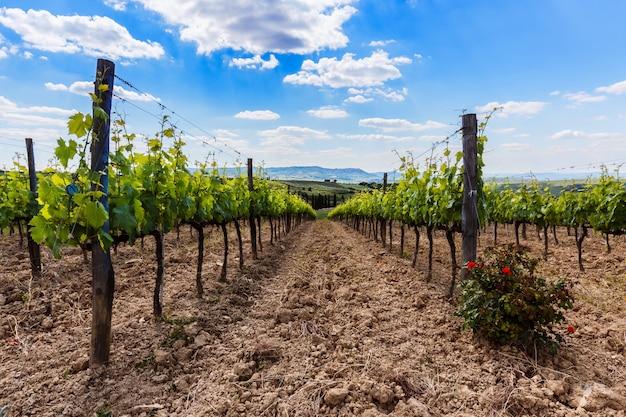 Widok wina pole i winogrono w włochy