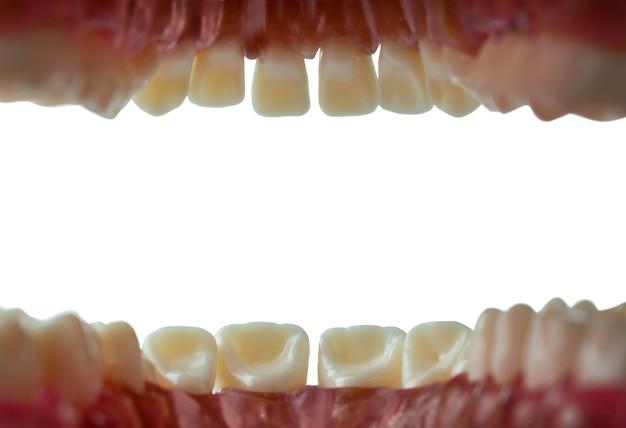 Widok wnętrza jamy ustnej i zębów