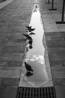 Widok wody pitnej gołębi z odbiciem nieba.
