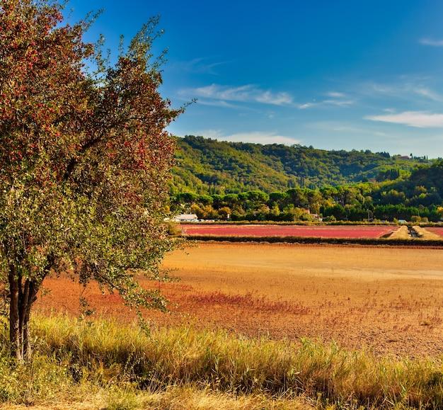 Widok wspólnego drzewa głogu pełnego czerwonych owoców jagodowych w parku przyrody strunjan w słowenii