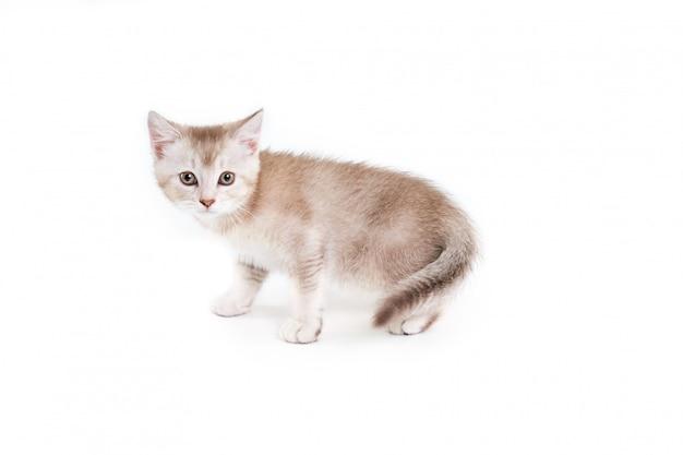Widok z boku białego i brązowego kotka.