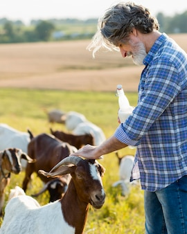 Widok z boku człowieka obok kóz z butelką mleka