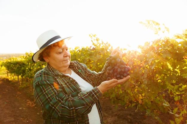 Widok z boku kobiety winiarza w kapeluszu pokazuje duże czerwone winogrono, starsza kobieta ubrana w kwadratowy s...