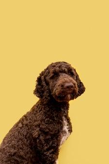 Widok z boku ładny pies pudel