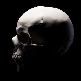 Widok z boku na model gipsowy ludzkiej czaszki