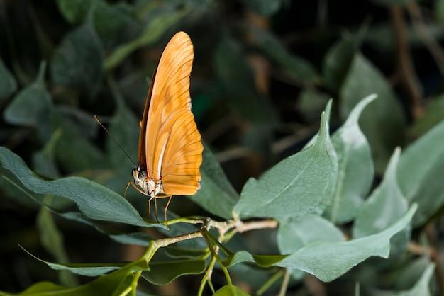 Widok z boku pomarańczowy motyl na liściu