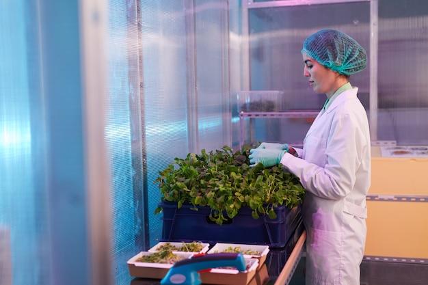 Widok z boku portret pracownica pole sortowania roślin zielonych w laboratorium bio lub szklarni, kopia przestrzeń