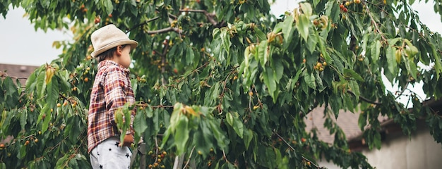 Widok z boku zdjęcie kaukaskiego małego chłopca w kapeluszu w ogrodzie jedzącego wiśnię z drzewa