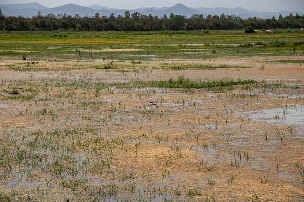 Widok z czarnoskrzydłym szczudlem w delta del llobregat, el prat, hiszpania