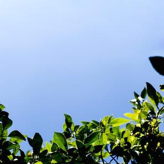 Widok z dołu gałęzi drzew
