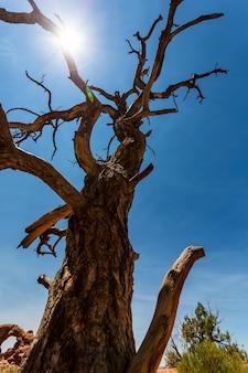 Widok z dołu na suche drzewo.