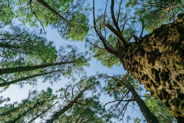 Widok z dołu na wierzchołki drzew.