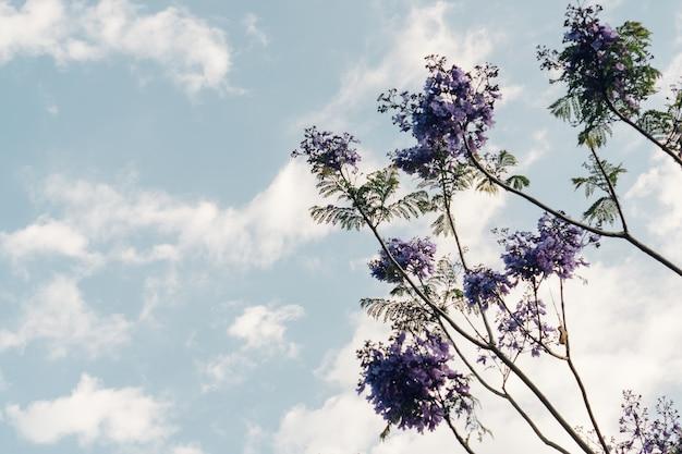 Widok z dołu rośliny z fioletowymi kwiatami
