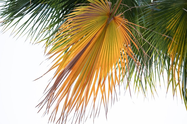 Widok z dołu teksturowanych gałęzi palmowych